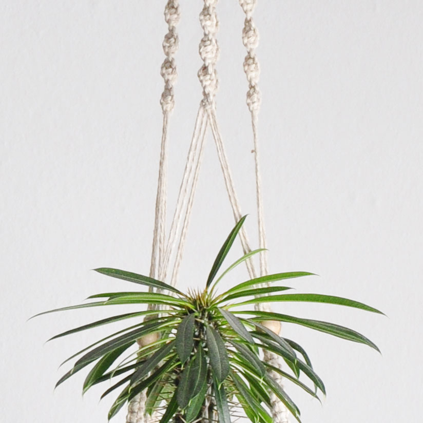 California Dreaming – Plant Hanger