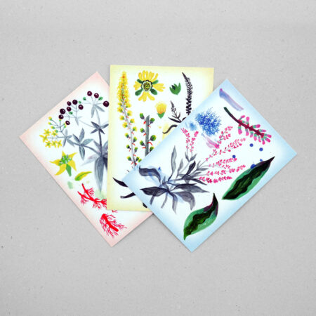 Postcard Set by Lina Müller – Dyeing Plants