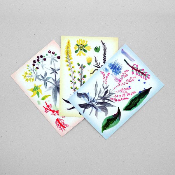 Postkartenset Lina Müller – Färberpflanzen